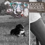 Hundeschule Coole Socken in Essen