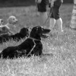 Hunde - Coole Socken Hundeschule Essen