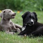 Hunde In-/ Outdoor