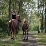Mensch&Pferd